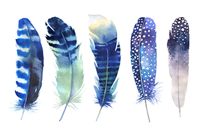 Blue feathers.